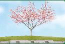 桜の木の下で眠る樹木葬