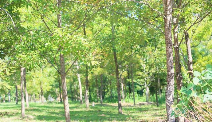 里山型樹木葬